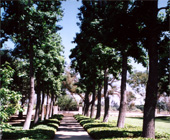 existing allee of trees